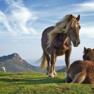 Sensibilité respiratoire chez le cheval : comment agir ?