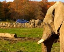 Le parc animalier de Thoiry : l'aventure aux portes de Paris