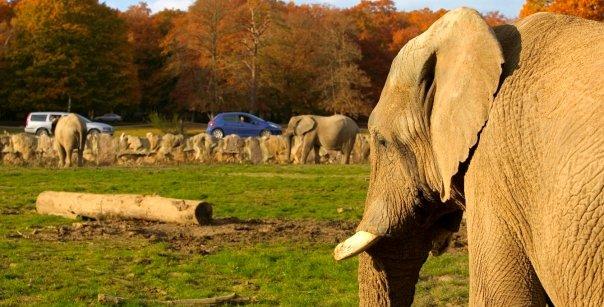 Le parc animalier de thoiry l aventure aux portes de for Parc animalier yvelines