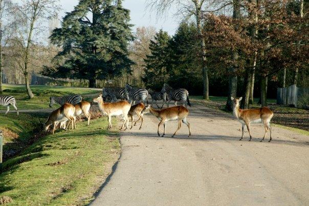 Préparez-vous à faire de drôles de rencontres dans la réserve du parc animalier de Thoiry