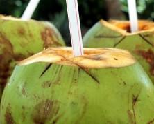 L'eau de coco : pourquoi on en boit ?