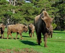 À la découverte de la faune sauvage en Provence-Alpes-Côte d'Azur
