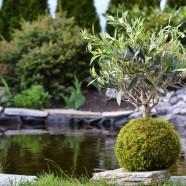 Kokedama : L'art de cultiver la mousse