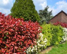 Une haie de jardin naturelle pour clôturer votre propriété